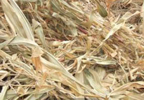 Pellet mill makes straw profitable kmec pellet plant as a result of the coal ban many manufacturers have to change the combustion mode and they use biomass pellet as fuels instead of coal corn straws can sciox Choice Image
