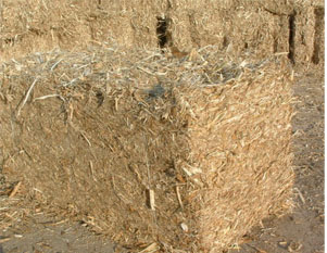 The utilization of straw is only 5 biomass energy needs our corn straw corn straw pellets sciox Choice Image